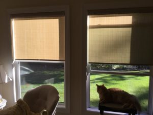 roller shades with cats